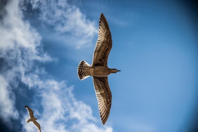 Орел летит, расправив крылья